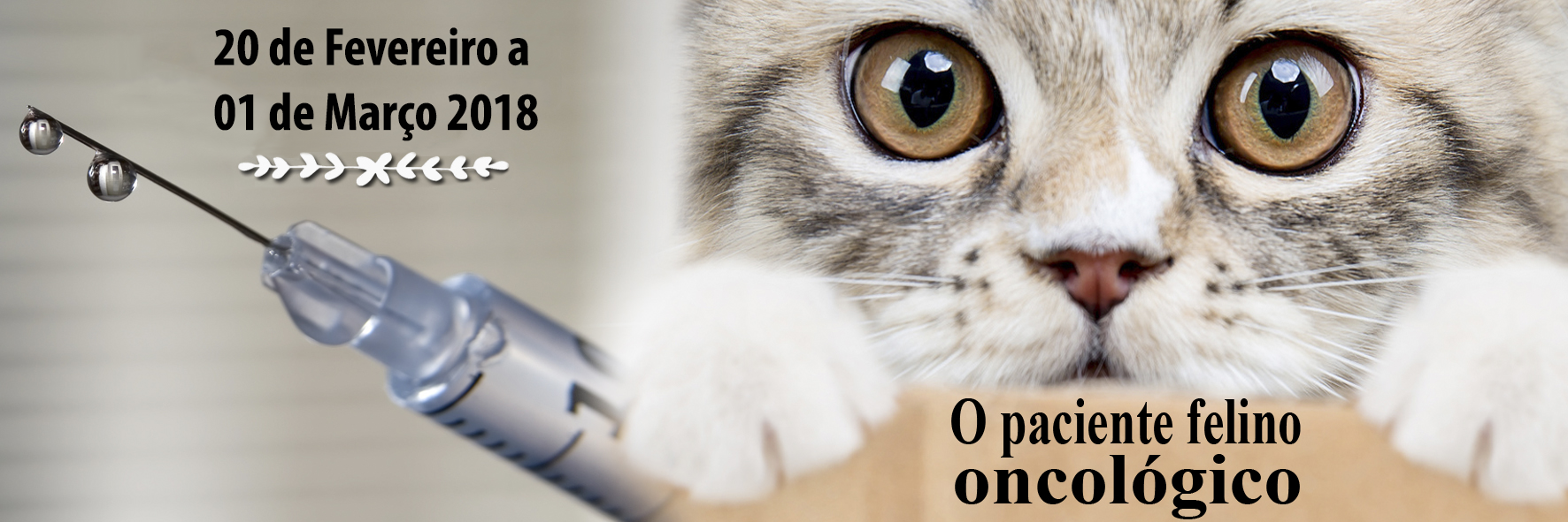 CAT Meeting - 10ª Temporada - Online/Ao vivo